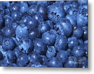 Blueberries With Waterdrops Metal Print by Sharon Talson