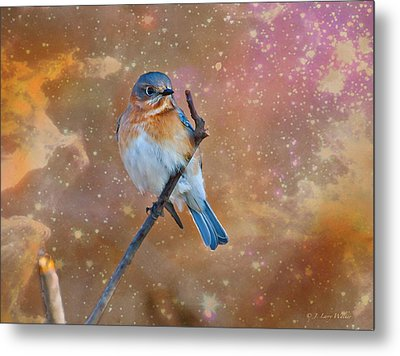 Bluebird Perched In Space Metal Print by J Larry Walker