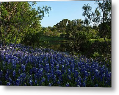 Metal Print featuring the photograph Bluebonnets At The Pond by Susan Rovira