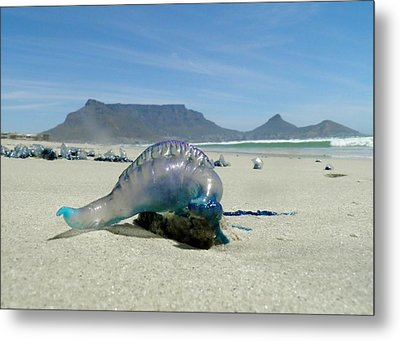 Metal Print featuring the photograph Bluebottle by Werner Lehmann
