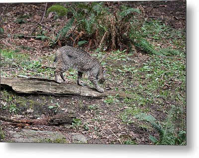 Metal Print featuring the photograph Bobcat - 0018 by S and S Photo