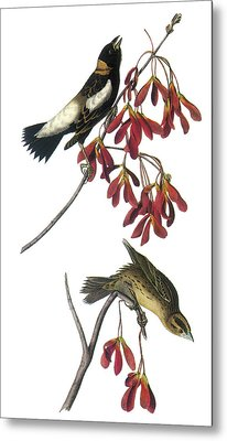 Bobolink Metal Print by John James Audubon