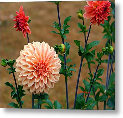 Metal Print featuring the photograph Bodaciously Orange by Jeanette C Landstrom
