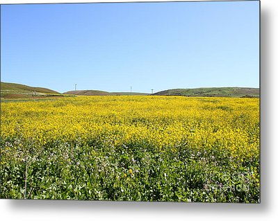 Bodega Bay . Yellow Field . 7d12403 Metal Print by Wingsdomain Art and Photography