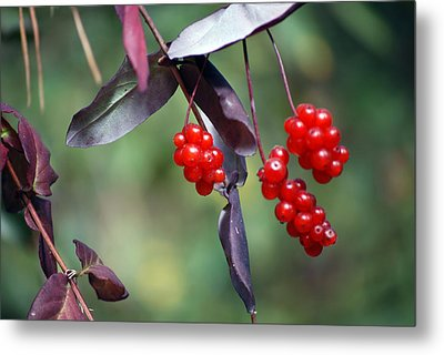Bokeh Of Coffee Berry Metal Print