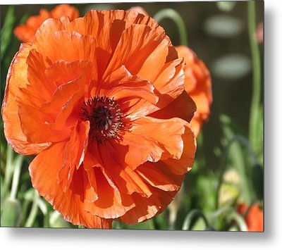 Bold Orange Poppy Metal Print by Rebecca Overton