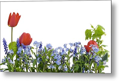 Metal Print featuring the photograph Border From Myosotis And Tulips by Aleksandr Volkov