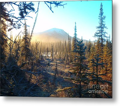 Boreal Forest Sunrise Metal Print