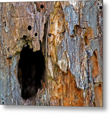 Bored By Woodpeckers Feeding Metal Print