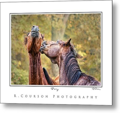 Bossy Metal Print by Ryan Courson