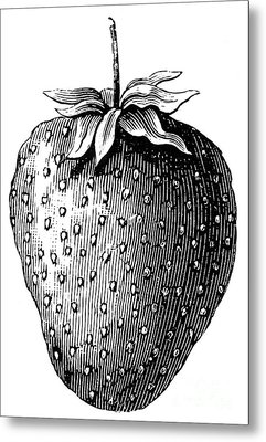 Botany: Strawberry Metal Print by Granger