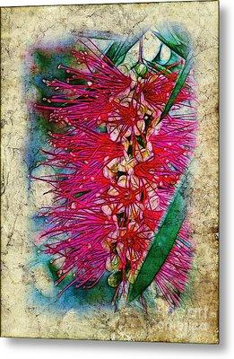 Bottlebrush Metal Print by Judi Bagwell