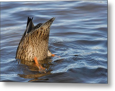 Metal Print featuring the photograph Bottom's Up by Cindy Manero
