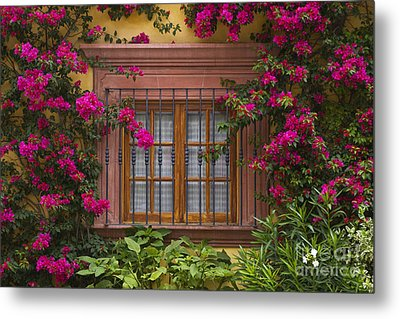 Metal Print featuring the photograph Bougainvillea Window by Craig Lovell