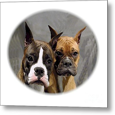 Boxer 402 Metal Print by Larry Matthews
