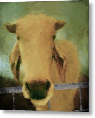 Brahma Cow Greeting Metal Print by Ann Powell