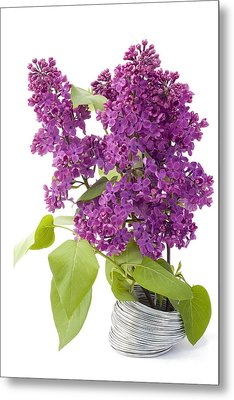 Metal Print featuring the photograph Branch Of A Lilac And Wire by Aleksandr Volkov
