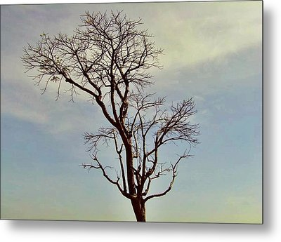 Branch Out Metal Print by Peter P G
