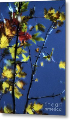 Branch Reflection Metal Print by Janeen Wassink Searles