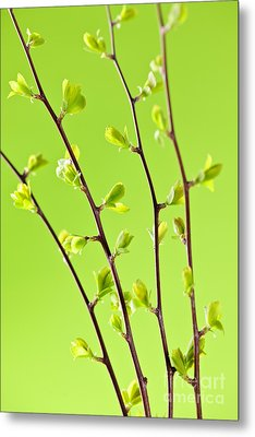 Branches With Green Spring Leaves Metal Print