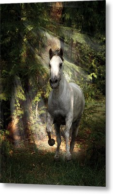 Breaking Dawn Gallop Metal Print by Wes and Dotty Weber