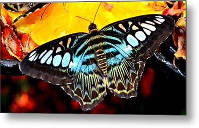 Metal Print featuring the photograph Bright And Blue by Rima Biswas