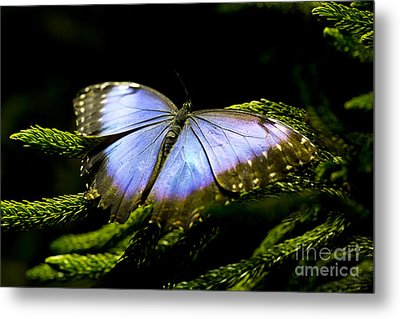 Bright Blue  Metal Print by Leslie Leda