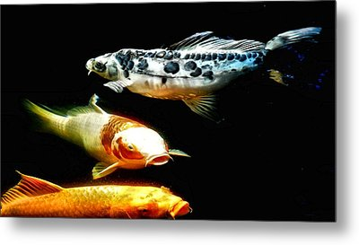 Bright Colored Fish Metal Print by Don Mann