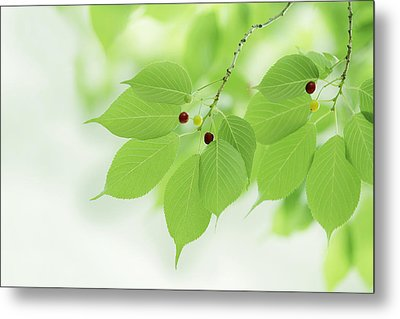 Bright Green Leaves Metal Print by Imagewerks