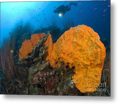 Bright Orange Sponge With Diver Metal Print by Steve Jones
