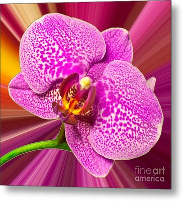 Bright Orchid Metal Print by Michael Waters
