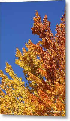 Brilliant Fall Color And Deep Blue Sky Metal Print by Mick Anderson