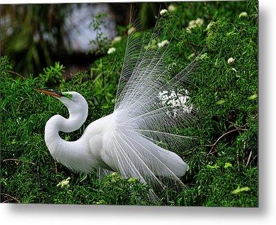 Brilliant Feathers Metal Print