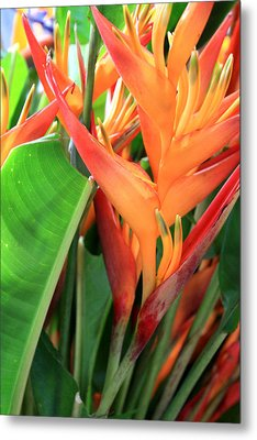 Metal Print featuring the photograph Brilliant Heliconia by Karen Nicholson