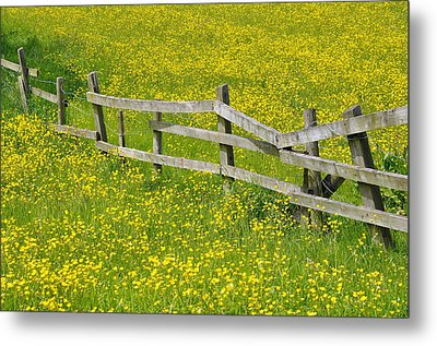 Broken Fence And Buttercup Field Metal Print by Photos by R A Kearton