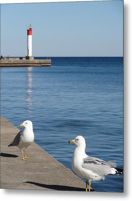 Metal Print featuring the photograph Bronte Lighthouse Gulls by Laurel Best