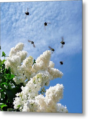 Bronze Bugs Fly In The Blue Sky Metal Print