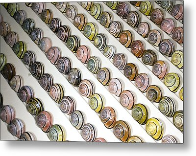 Brown-lipped Snail Colour Variants Metal Print by Dr Keith Wheeler
