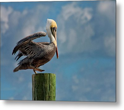 Brown Pelican Ready To Fly Metal Print by Sandra Anderson