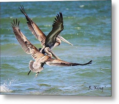 Brown Pelicans Taking Flight Metal Print by Roena King