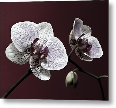 Brown Purple White Orchids Flower Macro - Flower Photograph Metal Print by Artecco Fine Art Photography