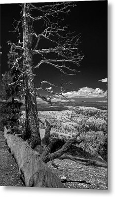 Bryce Canyon - Dead Tree Black And White Metal Print