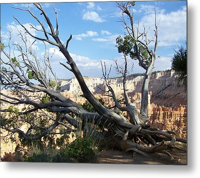 Metal Print featuring the photograph Bryce Canyon by Dany Lison