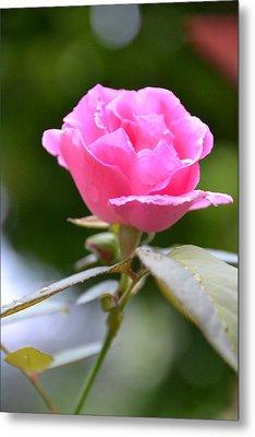 Bubblegum Rose Metal Print