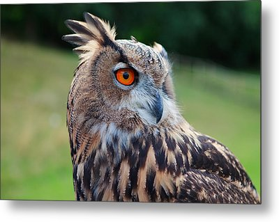 Bubo Bubo Metal Print by Pete Reynolds