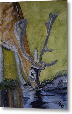 Buck At Bushy Park Metal Print