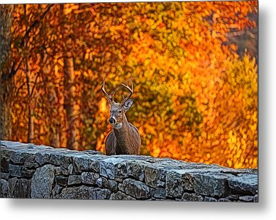 Buck Digital Painting - 01 Metal Print by Metro DC Photography