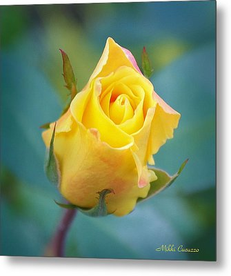 Budding Yellow Rose Metal Print by Mikki Cucuzzo