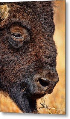 Buffalo Up Close Metal Print by Alan Hutchins
