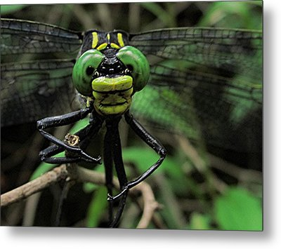Metal Print featuring the photograph Bug-eyed by Doug McPherson